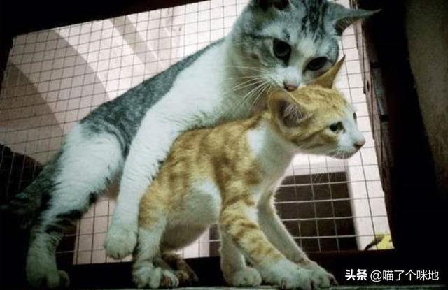猫咪后颈:为什么猫咪被抓住脖子后就会变