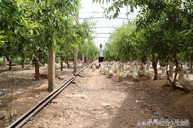 现在贫困地区有很多搞民族特色养殖业的农民朋友,野鼓颏养殖业项目如何?养殖业厂粪沟要用什么材料?