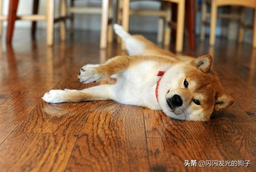狗狗的腿为什么突然瘸了,狗狗突然腿瘸有哪些