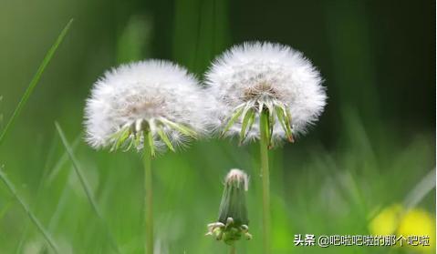 植物种子的传播方式有哪些(植物种子的传播方式有哪些 百度经验)