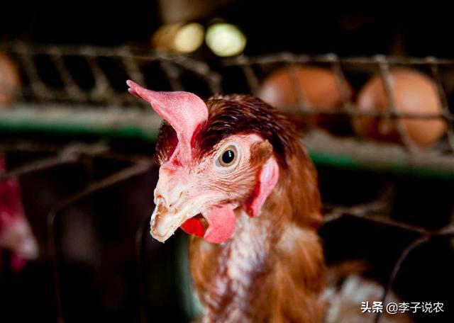 2020年的下半年,畜禽养殖前景怎么样?