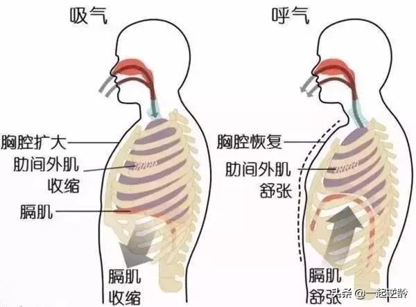 腹式呼吸对身体有害吗、怎么练就「腹式呼吸」?它对身体有哪些好处?插图