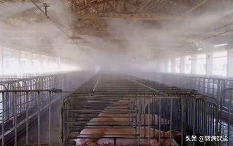 请问农村散养鸡舍如何防控工作西非白喉?哪些灭菌剂比较好?谢谢?回家山西老家搞小成本的生态养鸡可取吗?