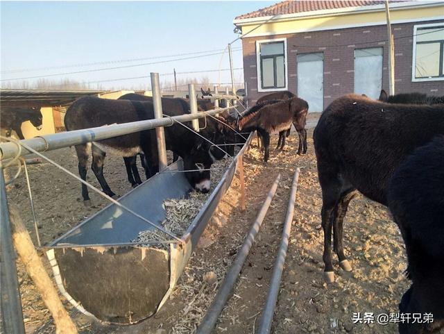骆驼消费市场如何?水产养殖业证办理条件?