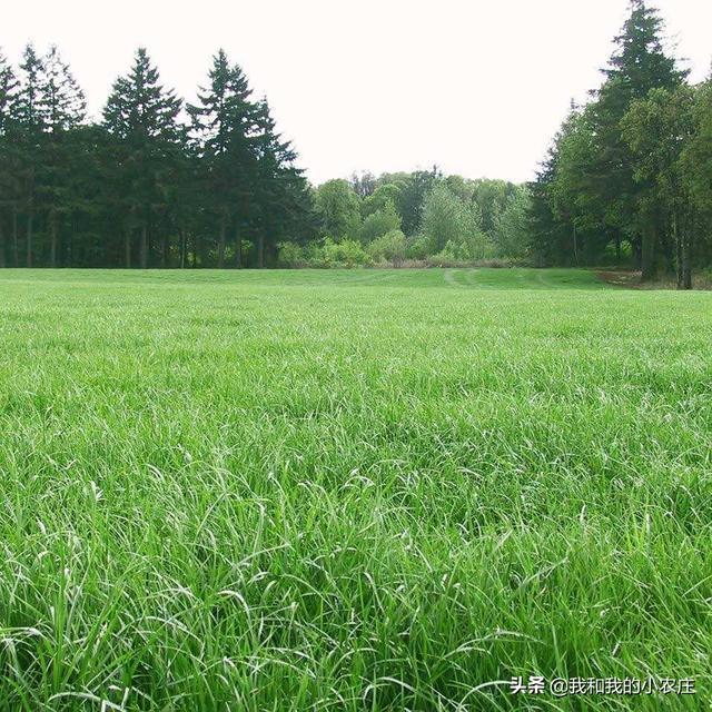 多年生牧草有哪些?