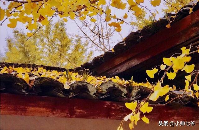 广州冬天最低温度是多少?