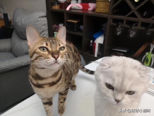 母猫要绝育吗,母猫做绝育,会有什么危害?