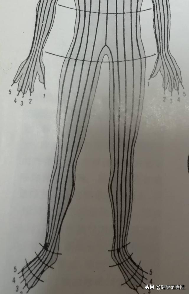 松江同乐网楼凤 :脚底按摩对人体真的很有益吗?证据何在?