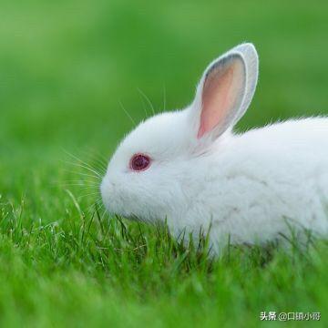 小兔子的图片,兔子出生需要打什么疫苗?