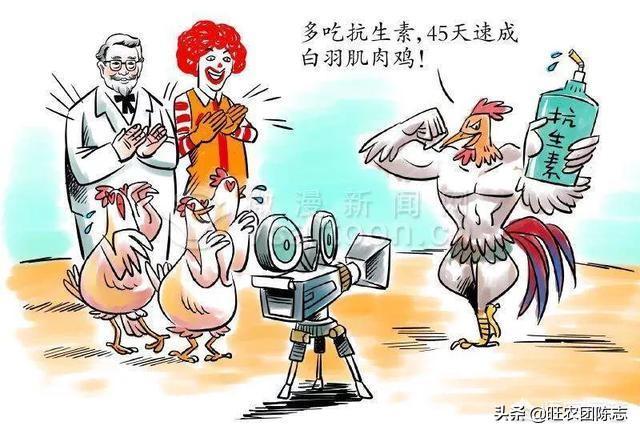 """40天出笼的""""速成鸡""""和200天散养的土鸡有什么区别?其实画画的并没有几个懂画的,买画的更如是,您觉得呢?"""