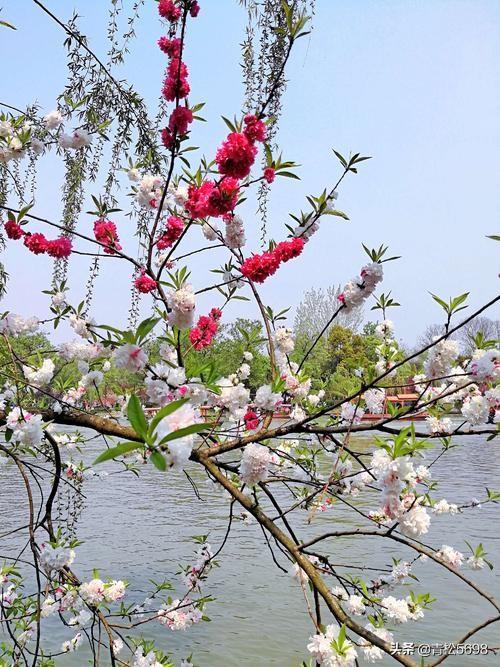 有没有适合朱自清《春》配乐诗朗诵的音乐?