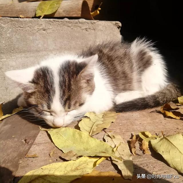 急急,刚到家的小猫咪不吃猫粮不喝水不用猫厕所怎么办?