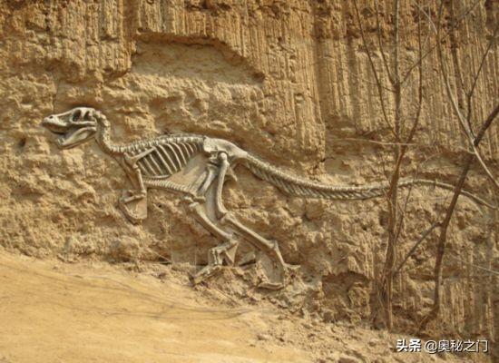 水月平原进化石(水月平原进化石在哪里)