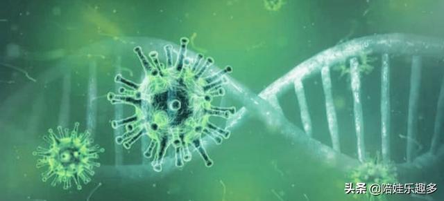 河北新型冠病毒最新情况 这次河北的新冠病毒是