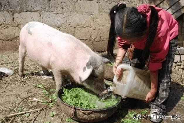 我想大量发展猪场,如果注意甚么样?有甚么在手机上比较称心的养鸡应用软件?