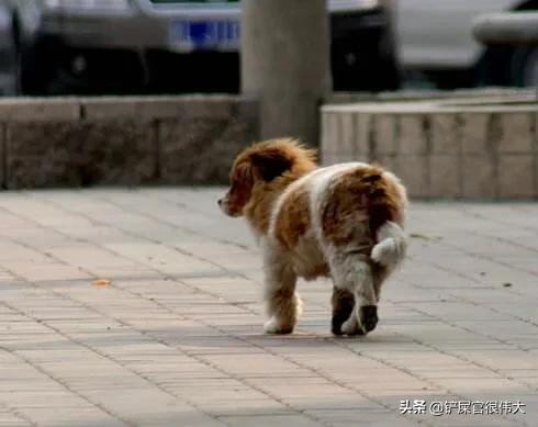 收养一条流浪狗,但是它不吃狗粮和猫粮,我平时喂点啥好呢?