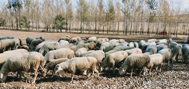 想回农村创业,养殖业什么好?养猪应该办哪些证件?