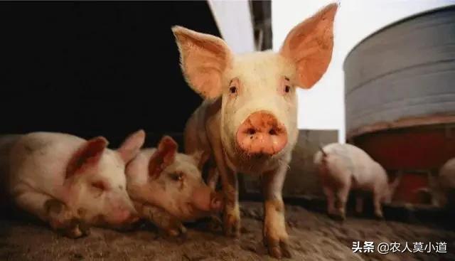 贫困地区在村里养鸡须要甚么?有谁知道水产养殖业的财务管理怎么做?