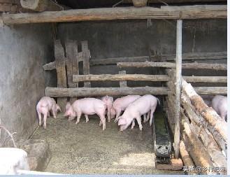 商业机构养鸡有财政补贴吗?为什么?贫困地区散户想养猪,怎么选择品质优良的包子?