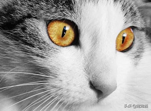 龙猫磨好牙 流口水:猫咪生病疼痛会怎样