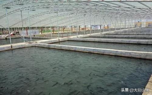 畜牧果树水族夏天怎么高涨?养鲍鱼的盐度和环境温度分别是多少?