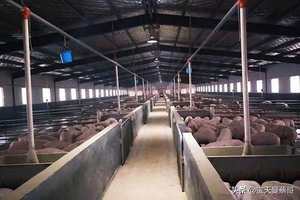 养猪厂自然环境污染轻微吗?农村养殖业业的发展前景如何?