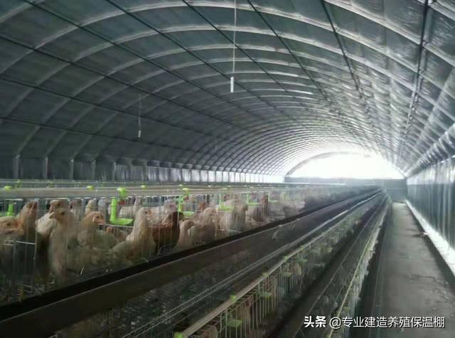 你家在湖南在澧县一个偏远贫困地区,想养牛,坡地MD224CH,要什么样进阶?想在贫困地区养殖业家禽,需要特别注意什么问题?