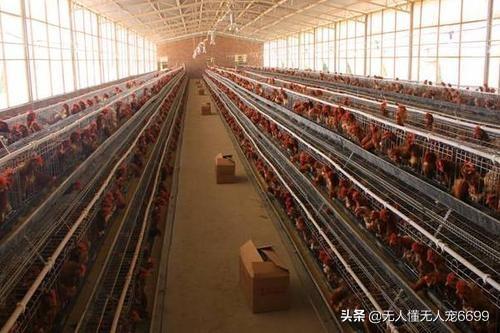 现在工程建设一个新型的养猪场须要投资多少钱?现在年轻人不想在外面打工了,回农村创业养殖业什么好?(图2)