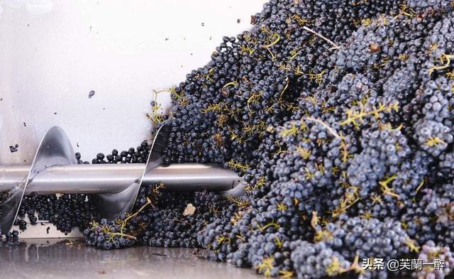 红葡萄酒的酿制方法(红葡萄酒的制作方法和步骤)