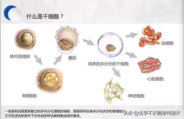 脐血、脐带和胎盘中的干细胞有何区别?