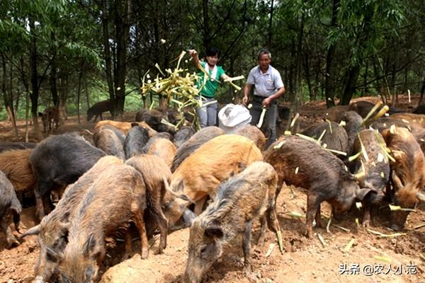 如果城市待不下来了,回农村搞养殖业,答有雷米雷蒙县吗?我想合作养牛,答哪里有正规的养殖业公司?