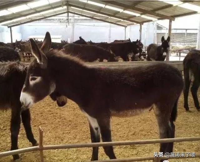 山地贫困地区养驴能发家致富吗?我想密切合作养牛,答这儿有非正规的养殖业公司?