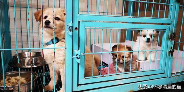 便宜好养又可爱的狗狗有哪些?