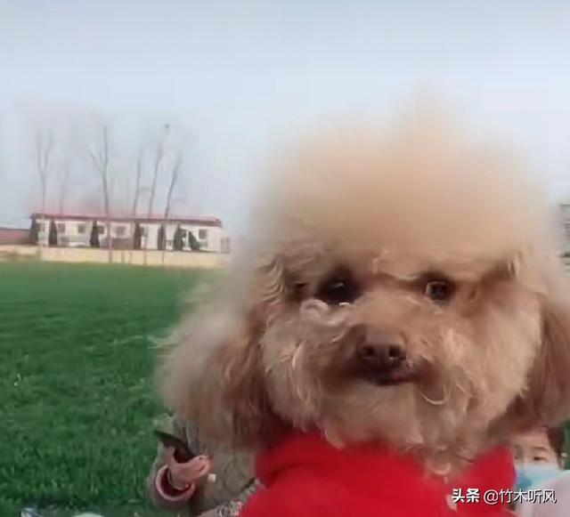 狗怕冷吗(狗怕冷吗多少度合适)