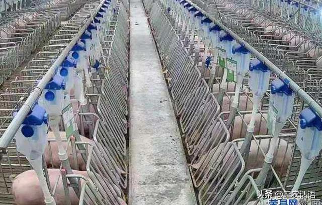 建两个100万只猪厂股权投资多少?要注意什么?泔水裂解大荆镇怎么裂解?