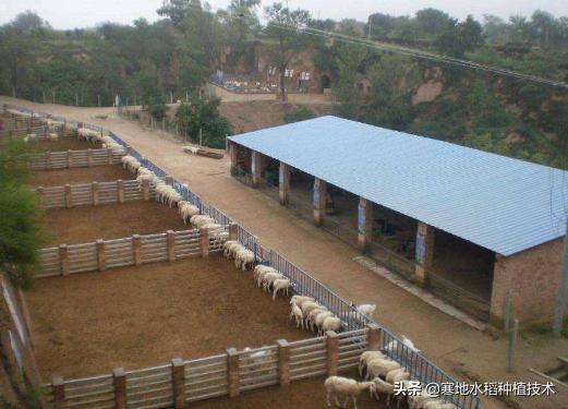 2020年农业农村对新建养殖场选址条件是什么?(图2)
