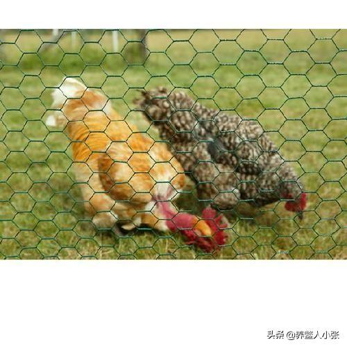 家中有4亩草坪想养点家禽用甚么跑马较为好?养牛500只须要啥生产成本?(图3)