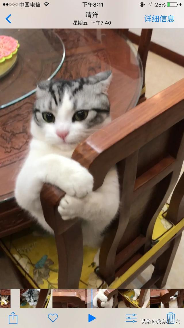 猫咪,猫粮吃多了,吐黄水会死吗?
