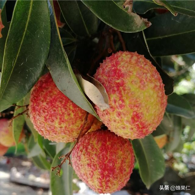 100种水果名字,世界前十大最好吃的水果有什么?