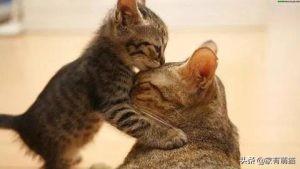 猫咪可以牛奶吗:两月大的猫可以喝牛奶吗