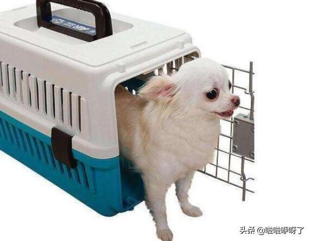 宠物可以带上飞机么,宠物如何办理托运?国内有哪些公司可以带宠物去上班呢?