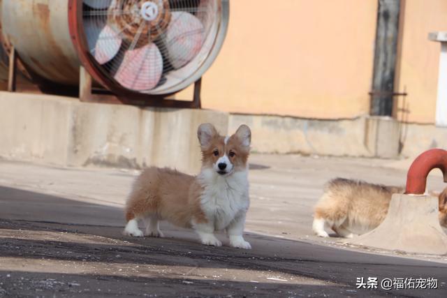 你最喜欢养哪种宠物狗?它给你带来了什么?辐射避难所废土探险属性怎么选,废土探险选择攻略?