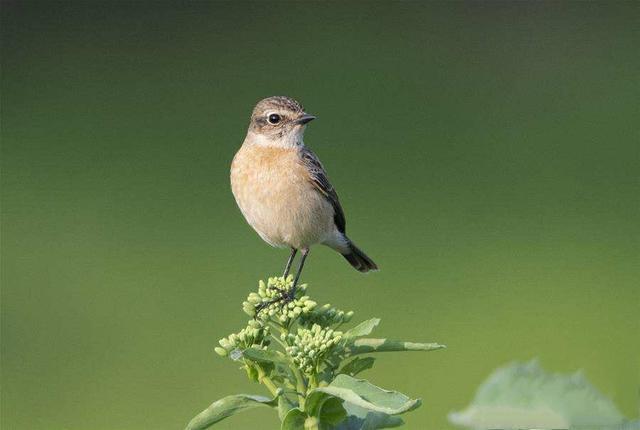 人与天上飞的小鸟比,谁更幸福和快乐?