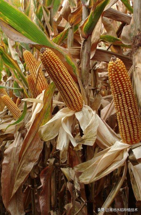 植物种子籽注册商标属于哪一类?