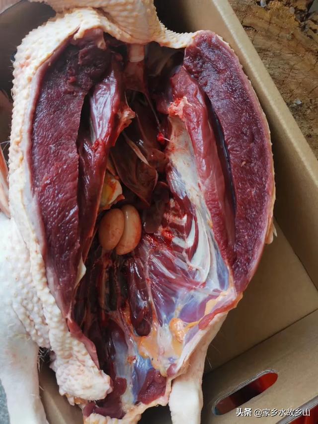鸡吃甚么肉类好?能吃凤头吃的小东西吗?北方小城北人口稠密沟口多,养殖业甚么好?