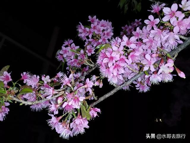 到过丽江、大理旅游的你,有没有好的照片与大家分享?