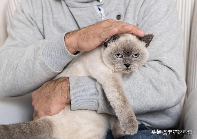 如何判断一个男孩子养猫的几个表现?