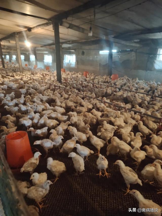 关注畜牧业,如何才能做到健康养殖呢?