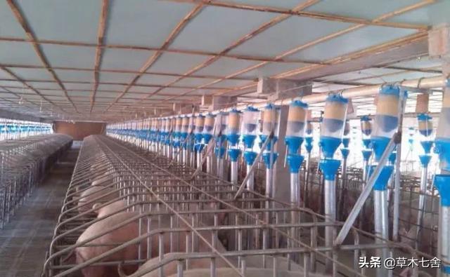 在平房养鸡,是不是很现代,既节能环保又节省农地,还能规模养殖?水产养殖控制技术?(图2)