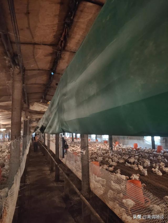 关注畜牧业,如何才能做到健康养殖呢?(图3)